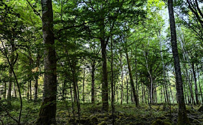 Rendre transparente la dotation biodiversité